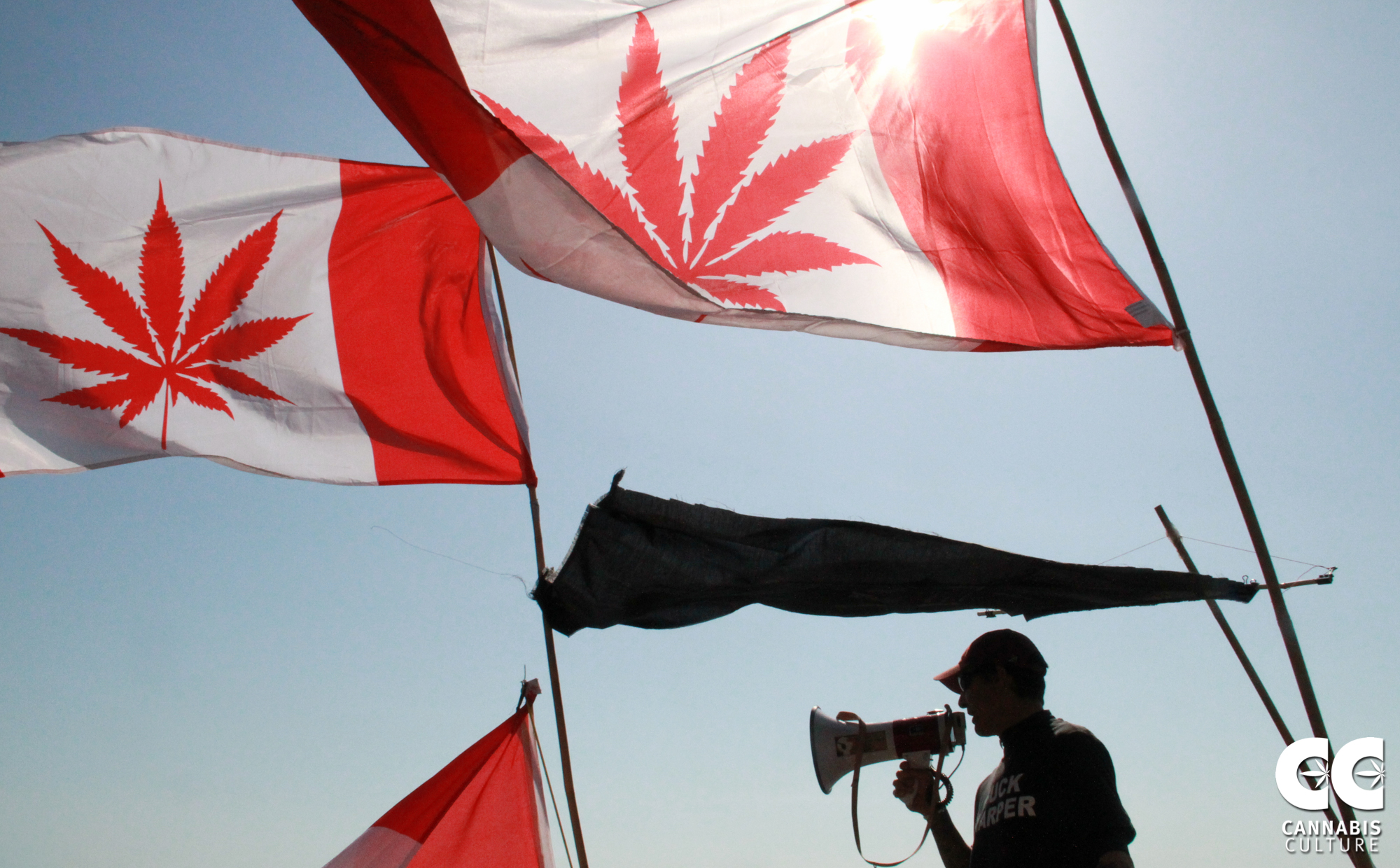 Canada flag with cannabis leaf.